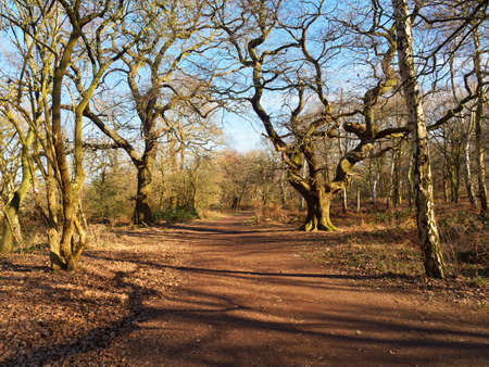 Bare Oak and Silver Birch trees stand either side of a deserted footpath in Sherwood Forest.