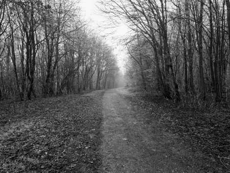 Trees fringed with frost line a wide footpath on a dark, cold, misty winter morning
