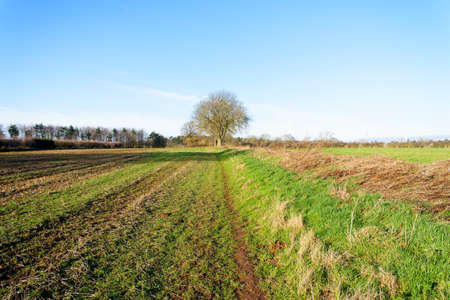 A lone tree stands on a footpath at the edge of a field in Nottinghamshire