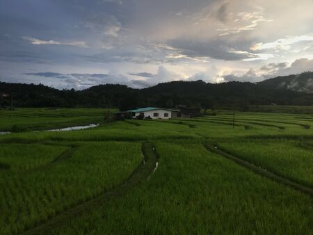View of Paddy Field Stock Photo
