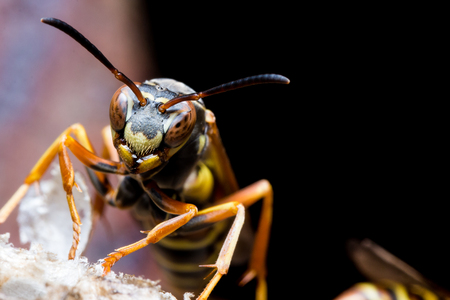 Paper wasp guards nest with rust in background