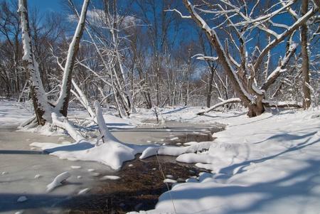 freshly fallen snow, in the backwaters of the rum river, rum river regional park, minnesota.