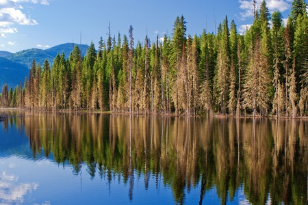 forest reflections, on a placid pond, in the bitterroot mountains, idaho.