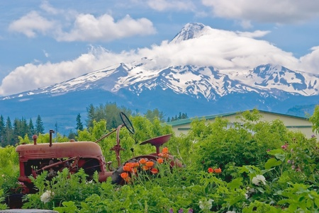 oregon cascades: A rusting tractor, surrounded by flowers, and Mount Hood in the backdrop.