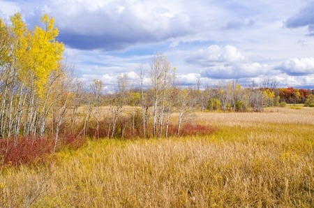 an autumn field and forest, in carlos avery wildlife management area, minnesota. photo