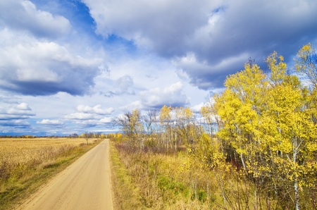 backroad: a rural autumn road in carlos avery wildlife management area, minnesota.