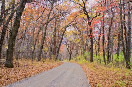 minnesota woods: a dirt road meanders through a maple forest in autumn, rural, minnesota.