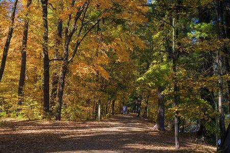 minnesota woods: a hiking trail in autumn, william obrien state park, minnesota. Stock Photo