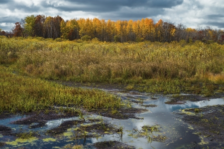 mille: wetlands and glowing aspen in mille lacs kathio state park, minnesota. Stock Photo