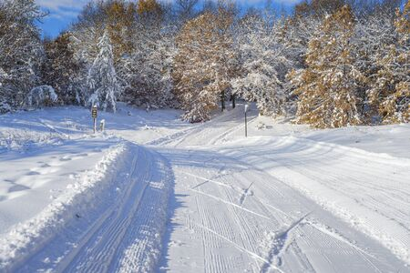 minnesota woods: cross country ski trail, in bunker hills regional park, minnesota.