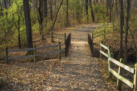 minnesota woods: a footbridge crosses a stream in a central minnesota forest, autumn.