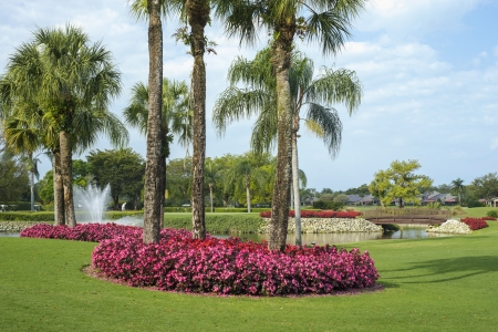 florida house: flowers and palms surround a pond on a golf course in florida. Stock Photo