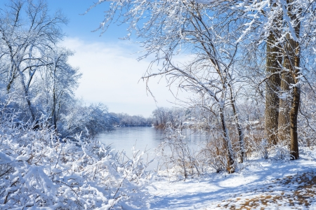 mississippi: snow flocked trees, mississippi river, manomin county park, fridley, minnesota
