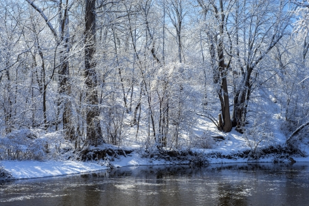 snow flocked trees, rice creek, manomin county park, fridley, minnesota