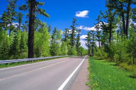 minnesota woods: northeast minnesota