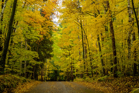 state of wisconsin: a dirt road rises under a canopy of autumn leaves at a campsite in potawatomi state park, wisconsin.