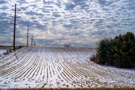 stalk: stunted corn rows and power lines march onward over a snow covered hill, rural wisconsin Stock Photo