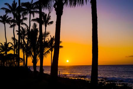 coqueiros são recortadas contra um pôr do sol maui goden, sobre o Oceano Pacífico, costa norte de Maui, Havaí.