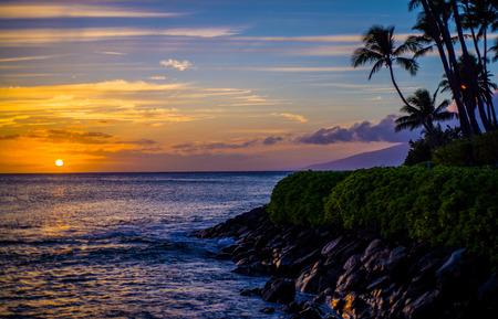 coconut palms above a rocky lava shoreline at sunset, napili bay, maui, hawaii.