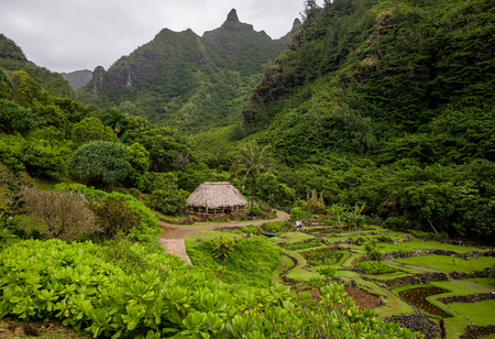 plants species: the limahui garden, on kauais north shore, exhibits native hawiian plant species, plants brought by early polynesian voyagers, and by settlers in the 1850s, beneath the dominating makana mountain, kauai, hawaii. Archivio Fotografico