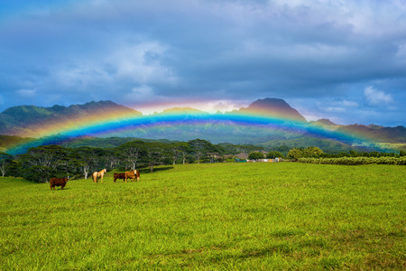 cattle and horses under a rainbow, and somewhere over the rainbow is mount haupu or known to the locals as black mountain, kauai, hawaii.