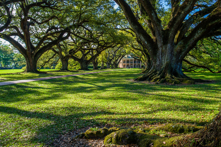 oak alley is named for a double row of live oak trees, planted over 300 years ago, running about 800 feet from the mississippi river to the mansion, in louisiana.