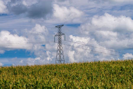 a power line tower carries power lines over a corn field in central minnesota,