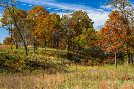 an autumn hardwood forest, on a grassy hillside, in bunker park, minnesota