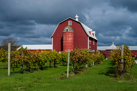 a vineyard and barn hold onto the last rays of sun before the cool autumn skys overtake, rural door county, wisconsin. Stock Photo