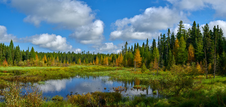 grade road pond, in superior national forest, minnesota, early autumn