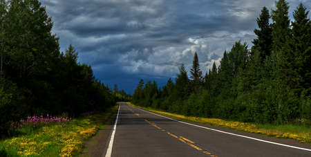 flowers bloom along the gunflint trail, as a storm passes by to the north, superior national forest, minnesota.