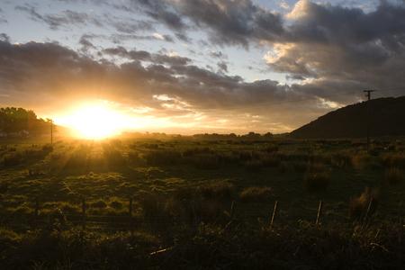 curio: Sunset over sheep field, curio bay, new zealand