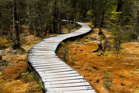 hag: Boardwalk through deep forest milford track, new zealand