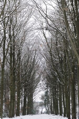 sombre: Cold winter forest path covered in snow Stock Photo