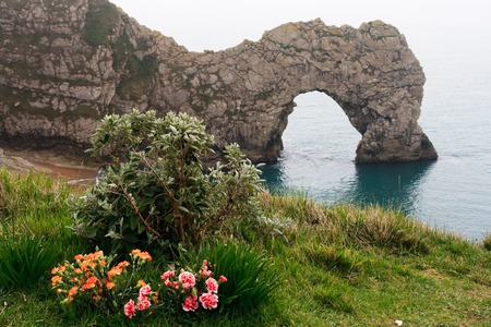 foreground: Foreground Flowers in Lulworth Cove, Durdle Door, Coastal Rock Arch Stock Photo