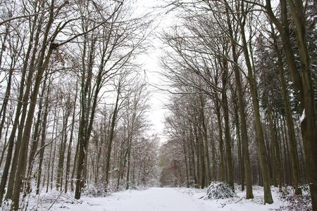 sombre: Tree lined snowy forest path in Winter Stock Photo