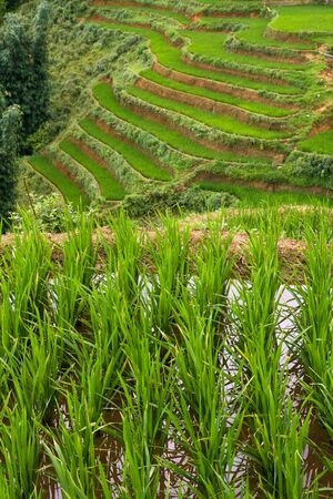 flooded: Flooded rice paddy terraces Stock Photo
