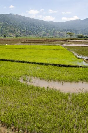 south east: Flooded Rice Paddy, Vietnam, South East Asia