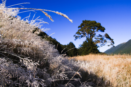 frost covered: Cold morning with scenic frost covered grass