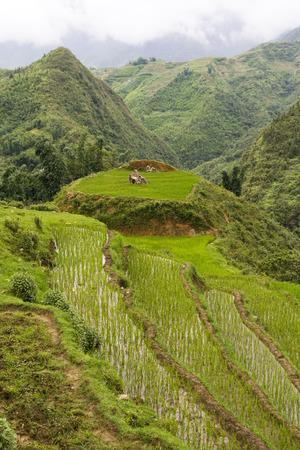 mountainous: Rice paddy terraces in mountainous Sapa highlands, Vietnam Stock Photo