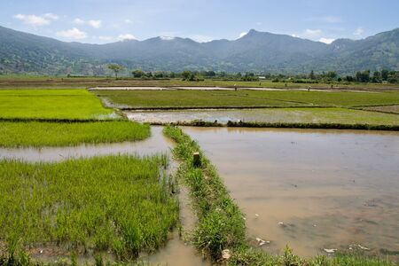 flooded: Flooded Rice Paddy