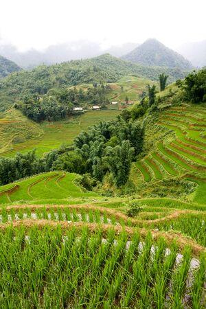 padi: Highland rice paddy terraces in Sapa, Vietnam Stock Photo