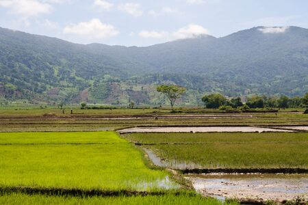 south east asia: Distant workers in rice paddy fields, South East Asia Stock Photo