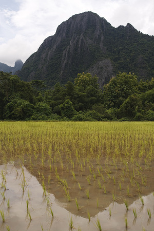 Flooded Laos Rice Paddy with Mountain sin Background, South East Asia