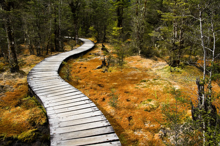 underbrush: Winding forest wooden path walkway through wetlands, milford  track, new zealand