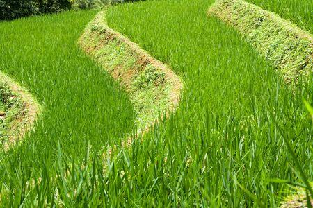 Rice Paddy Terrace Pattern