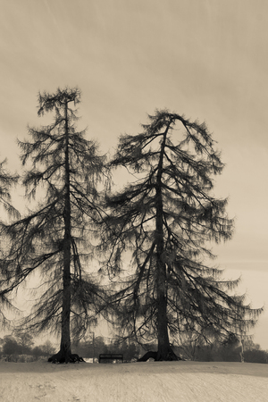 Artistic trees in winter Stock Photo