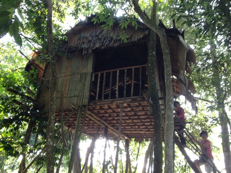 Tribe Tree House