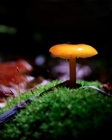 illuminated: Illuminated Mushroom