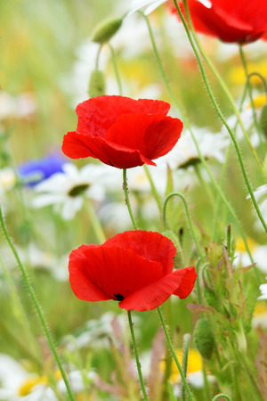vibrancy: demonstrating the colors and vibrancy of such a flower border. Stock Photo